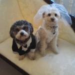 Wedding Dresses Waterdown